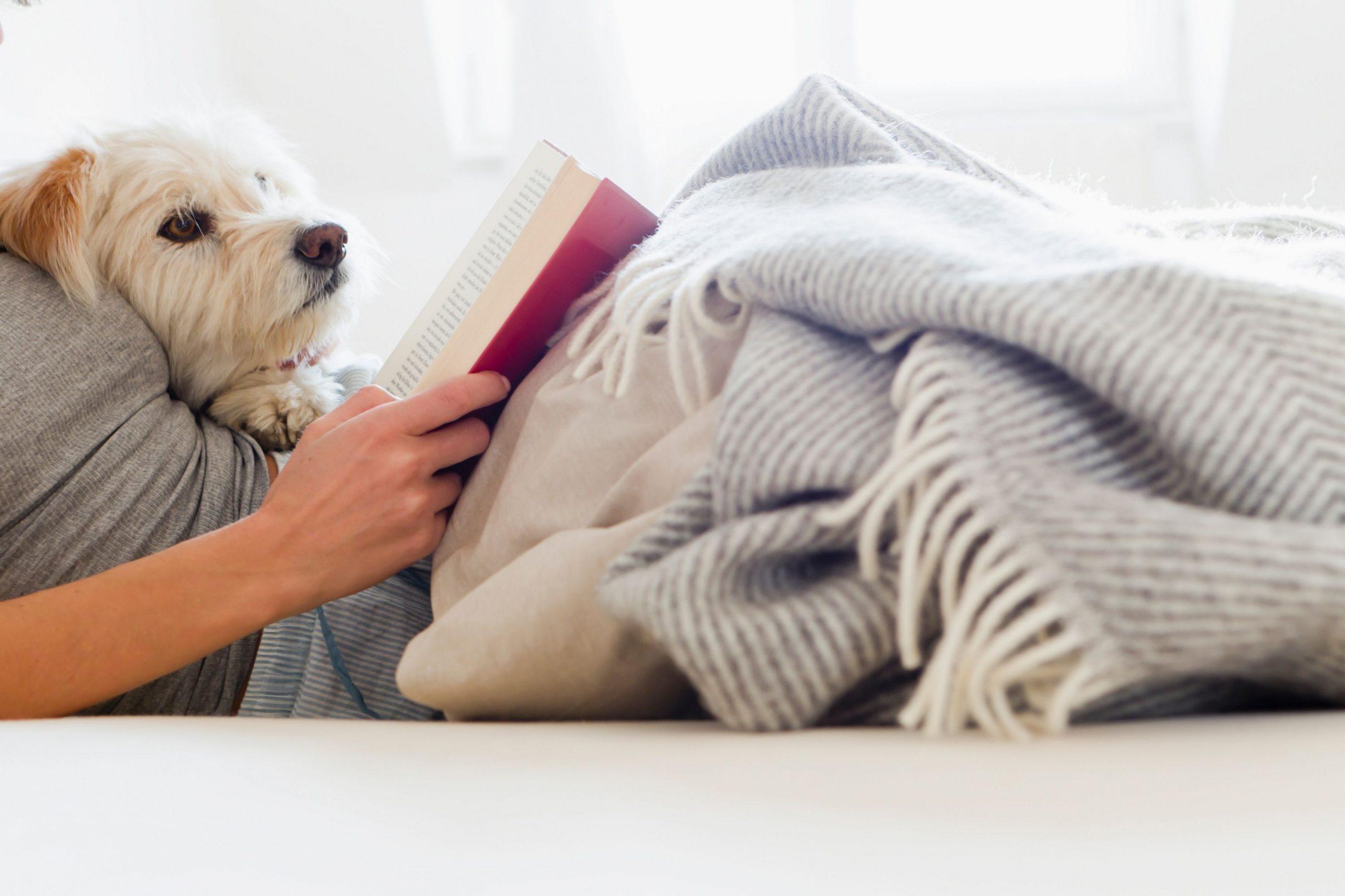 Rasakan momen membaca buku bersama dengan pelihaaran kamu